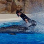 dierenleed,dolfijn,een stapje